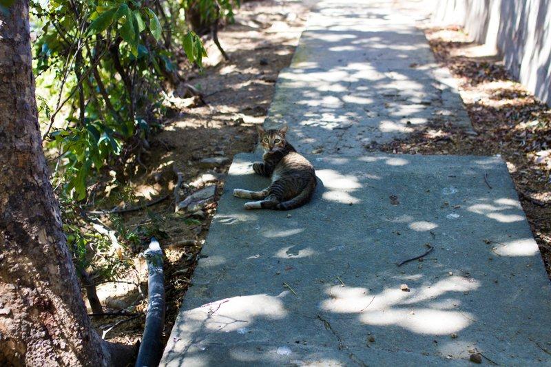 Cat in San Juan Del Sur, Nicaragua