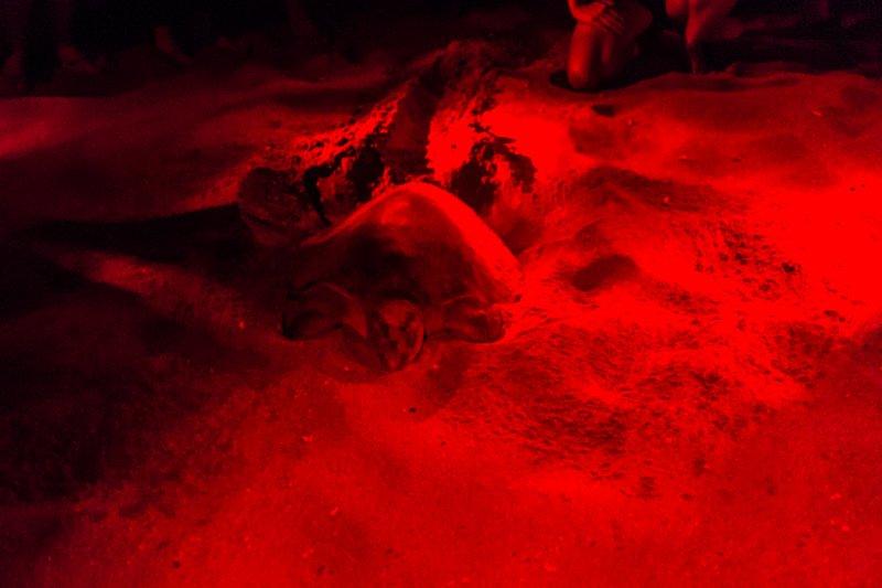 Turtle Tour (4 of 7)