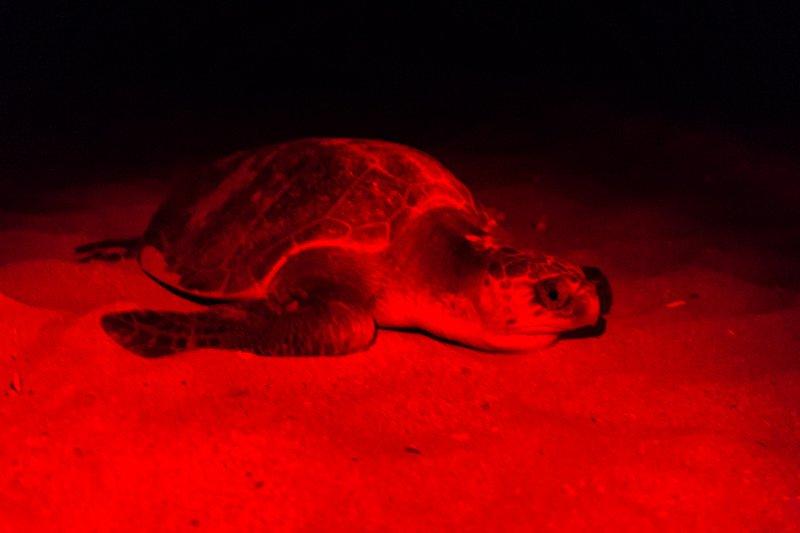 Turtle Tour (5 of 7)